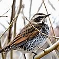 春の野鳥 06