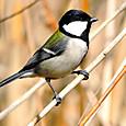 春の野鳥 04