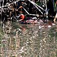 春の野鳥 07